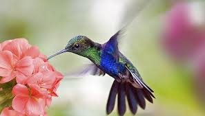 Hummingbird On A Flower - ostrich u0026 hummingbird similarities sciencing