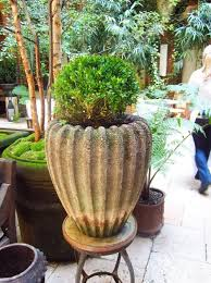 Potted Plants For Patio Potted Plants For Patio Privacy Home Design Ideas