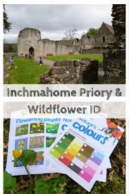 inchmahome priory and wildflower id monkey and mouse