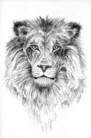 lion pencil sketch by s4 d on deviantart