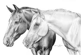 11 best horses images on pinterest horses horse drawings and