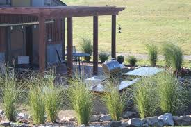 cutting back and dividing ornamental grasses preparing for