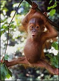 Baby Monkey Meme - busy