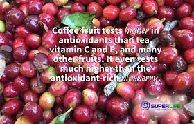 discover the superfood power of whole coffee fruit