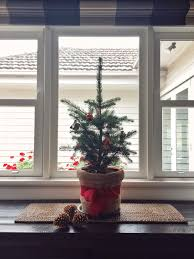 Small Indoor Trees by How Winter Indoor Plants Bring Joy And Promote Wellness