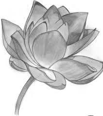 lotus flower by seraph444 on deviantart