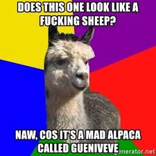 Alpaca Sheep Meme - does this one look like a fucking sheep naw cos it s a mad