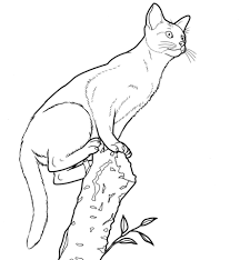 abyssinian cat coloring free printable coloring pages