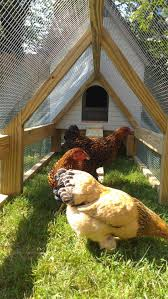 the wee kirk coop backyard chickens