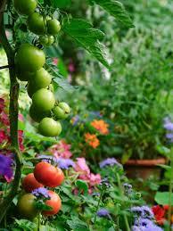 Edible Garden Ideas Edible Landscaping Growing Your Own Food Hgtv