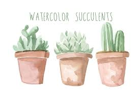 succelents watercolor succulents illustrations creative market