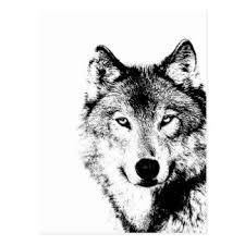 grey wolf picture postcards zazzle