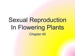 sexual reproduction in flowering plants ppt video online download