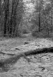 Northern Comfort Bridgewater Ma Hockomock Swamp Beyond The Bridgewater Triangle With Kristen Evans