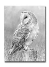 the 25 best owl drawings ideas on pinterest owl sketch animal