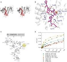structural insight into recognition of phosphorylated threonine u20104