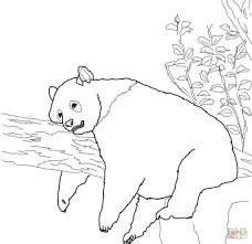 panda coloring pages good 6452