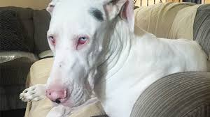 Are Dogs And Cats Color Blind Why Are White Coated Dogs Deaf