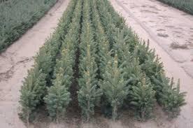 seedlings u0026 transplants bosch u0027s countryview nursery inc