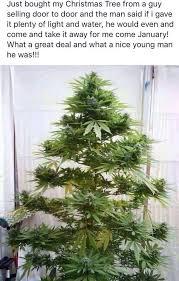 funky tree steemit