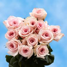 flowers for mothers day light pink roses best flowers for mother u0027s day global rose
