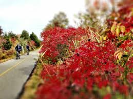 fall colors 2014 in woods hole