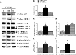 diabetes induced renal injury in rats is attenuated by suramin
