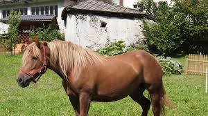 need a home for your horses 4 union county home listings around