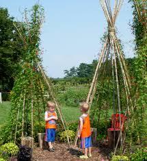 kids gardening build a bean teepee thyme to grow