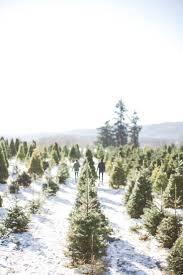 merry to all hunts tree farm