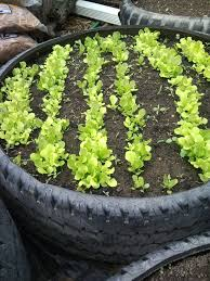 Best Soil For Vegetable Garden In Raised Bed by Used Tired Raised Garden U0026amp Tree Ring 6 Steps With Pictures