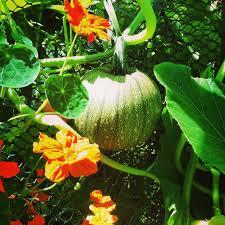 the perfect pumpkin patch hope gardens