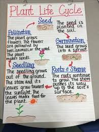 create an animal or plant good activity for 2nd grade science