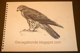 recollections of a vagabonde recollection bird drawings from sir