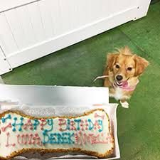 birthday u0026 celebration cakes for dogs u2013 the dog bakery