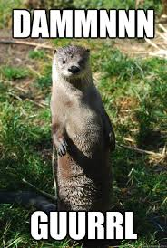 Otter Meme - say what otter memes quickmeme