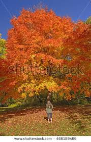 iowa park stock images royalty free images u0026 vectors