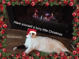 december 2016 feline opines