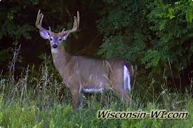 Wisconsin wild animals images Wisconsin wildlife wi facts photos video jpg