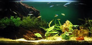 need help selecting fish for an aquarium sle ornamental