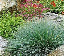 give your garden four seasons of interest with low maintenance