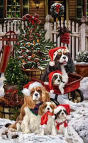 125 best cavalier king charles images on cavalier king