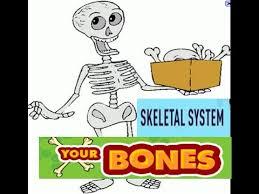 skeletal system functions for kids youtube