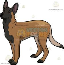 belgian sheepdog clipart an adorable belgian malinois cartoon clipart