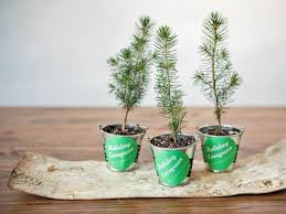 christmas table favors to make make evergreen tree party favors hgtv