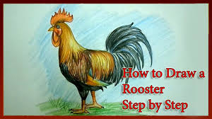 how to draw a rooster step by step youtube