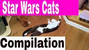 Star Wars Cat Meme - star wars cats jedi kittens funny star wars cats the catnip