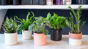 plantes dans la chambre 5 plantes pour la chambre à coucher qui aideront à améliorer la