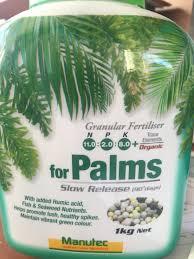 native plant fertiliser palm suitable ferteliser in australia discussing palm trees