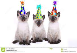 cat singing happy birthday stock photos images u0026 pictures 34
